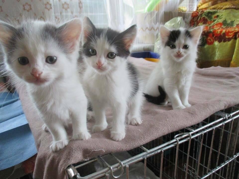 Они ищут хозяев: свежая подборка покровских котят, которые ищут дом, - ФОТО, фото-3