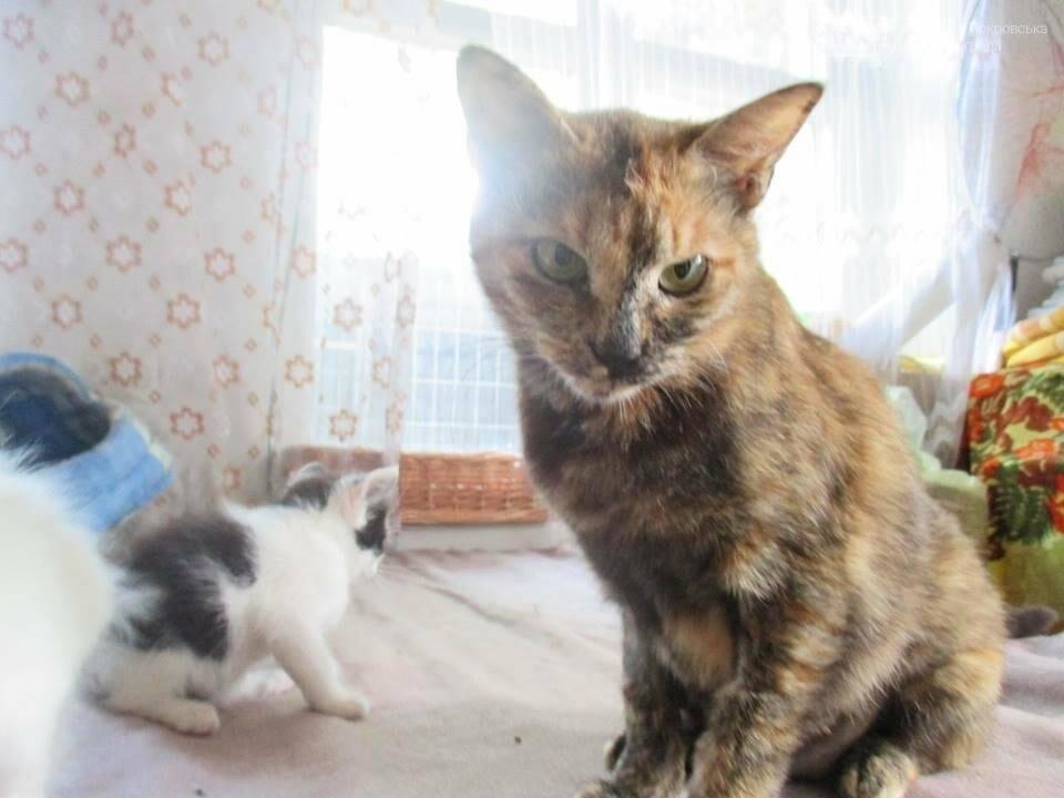 Они ищут хозяев: свежая подборка покровских котят, которые ищут дом, - ФОТО, фото-2