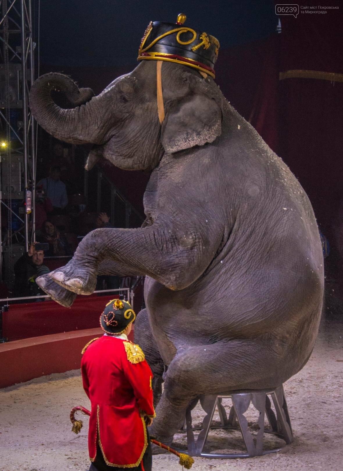 Цирк «Кобзов» привезет Италию в Мирноград!, фото-6