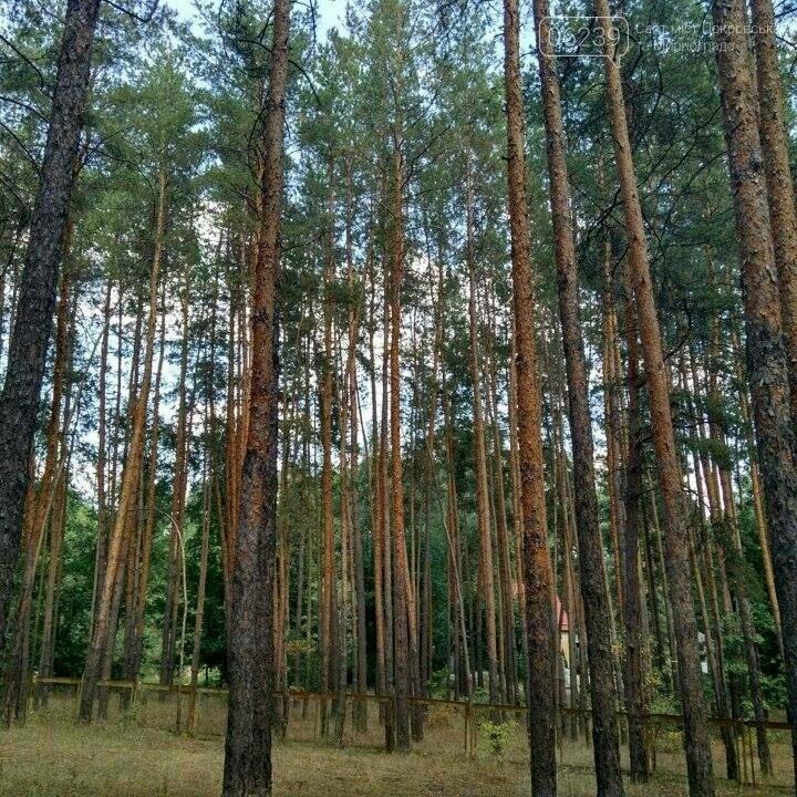 База отдыха «Сосна» в Щурово:  горняки ШУ «Покровское» отдыхают с комфортом, фото-10