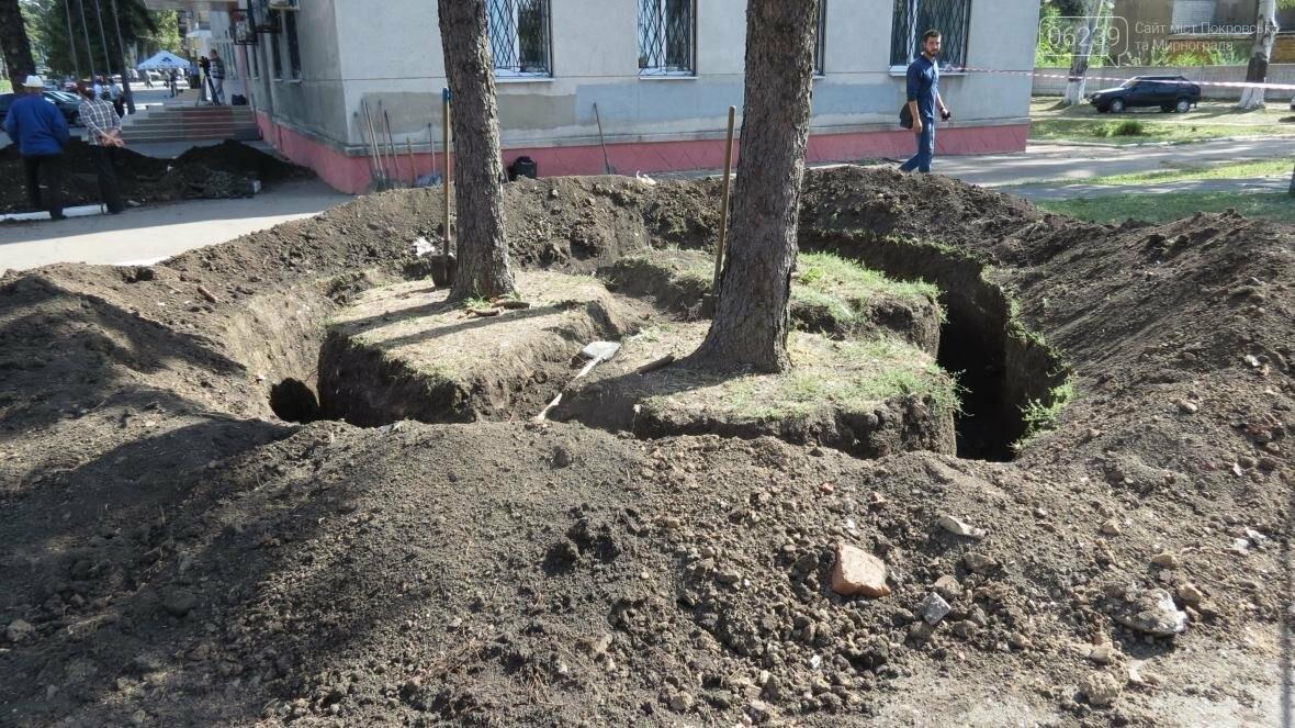 """В Покровске ели, растущие на площади у мэрии, меняют """"прописку"""", фото-7"""