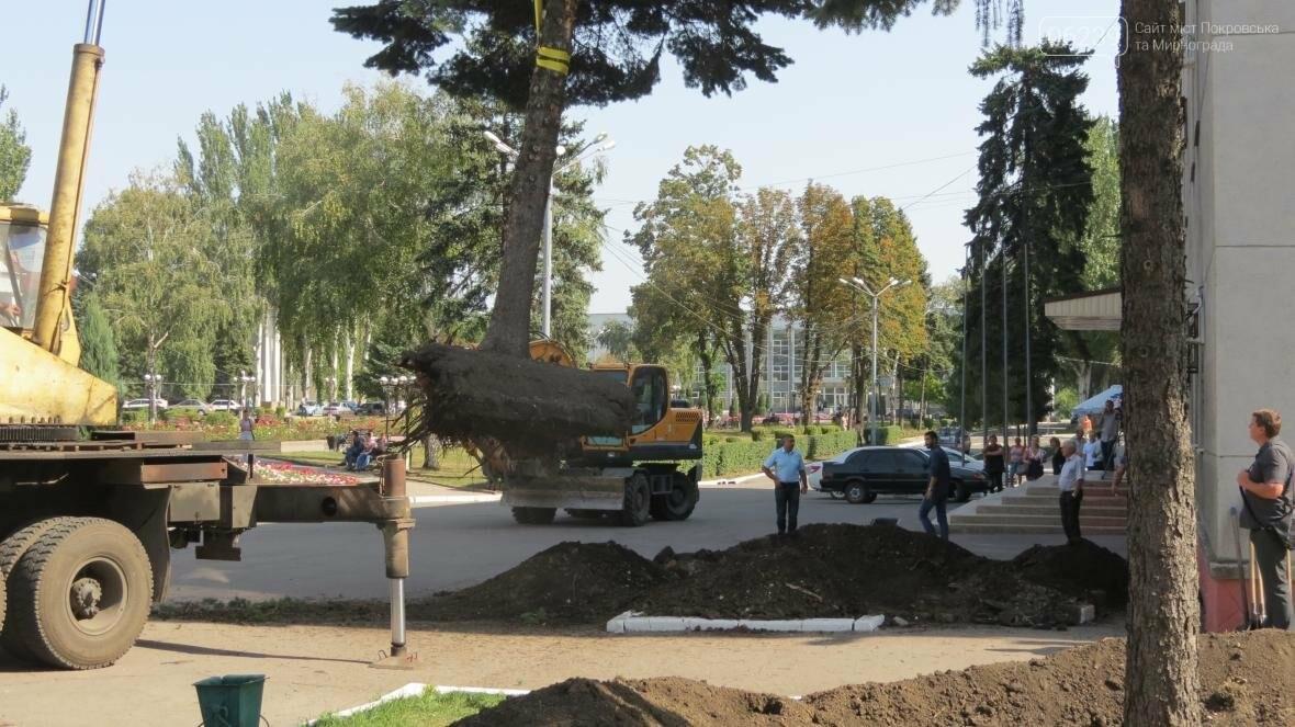"""В Покровске ели, растущие на площади у мэрии, меняют """"прописку"""", фото-5"""