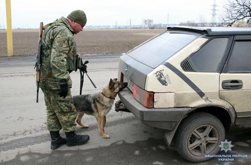 Почему в Покровске полицейские со служебными собаками проверяют поезда и автобусы , фото-2