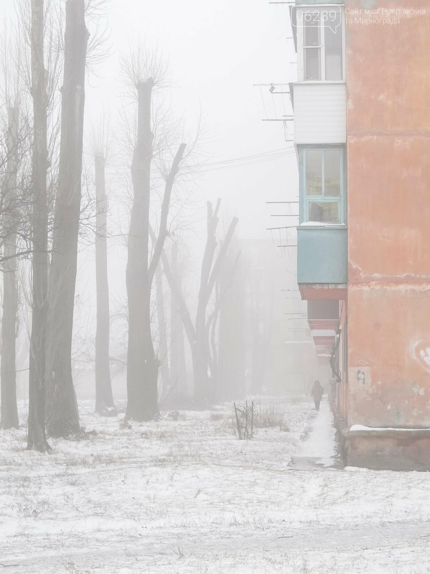 """""""Приговоренные"""" тополя, каштаны и липы: стало известно, какие деревья спилят в Покровске , фото-1"""