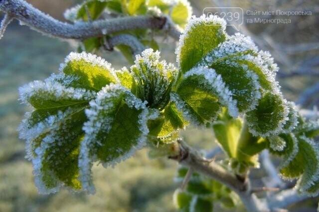 Донецкая область получила предупреждение о грядущих заморозках, фото-1