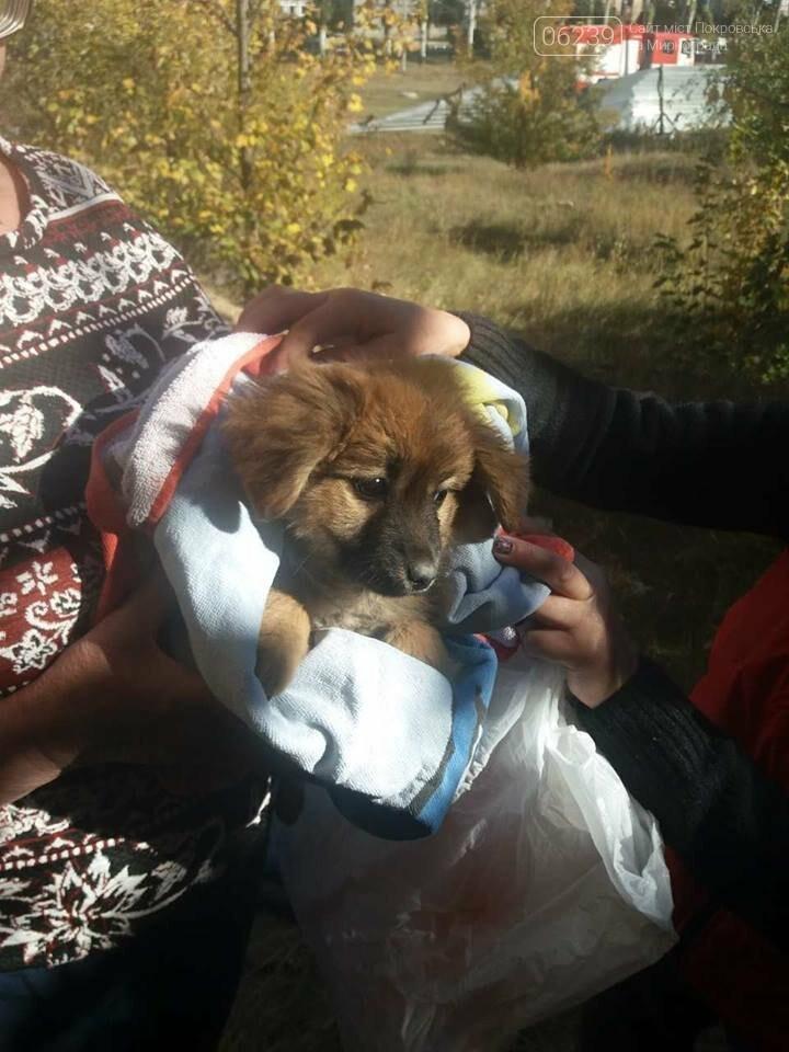 В Покровске спасатели достали из колодца щенка, фото-3