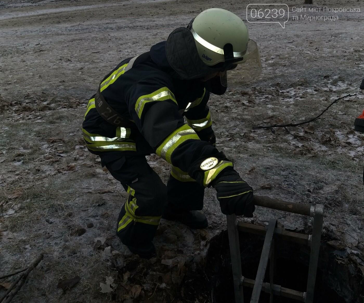 У Покровську бійці ДСНС врятували собаку, який впав у каналізаційний колодязь, фото-1
