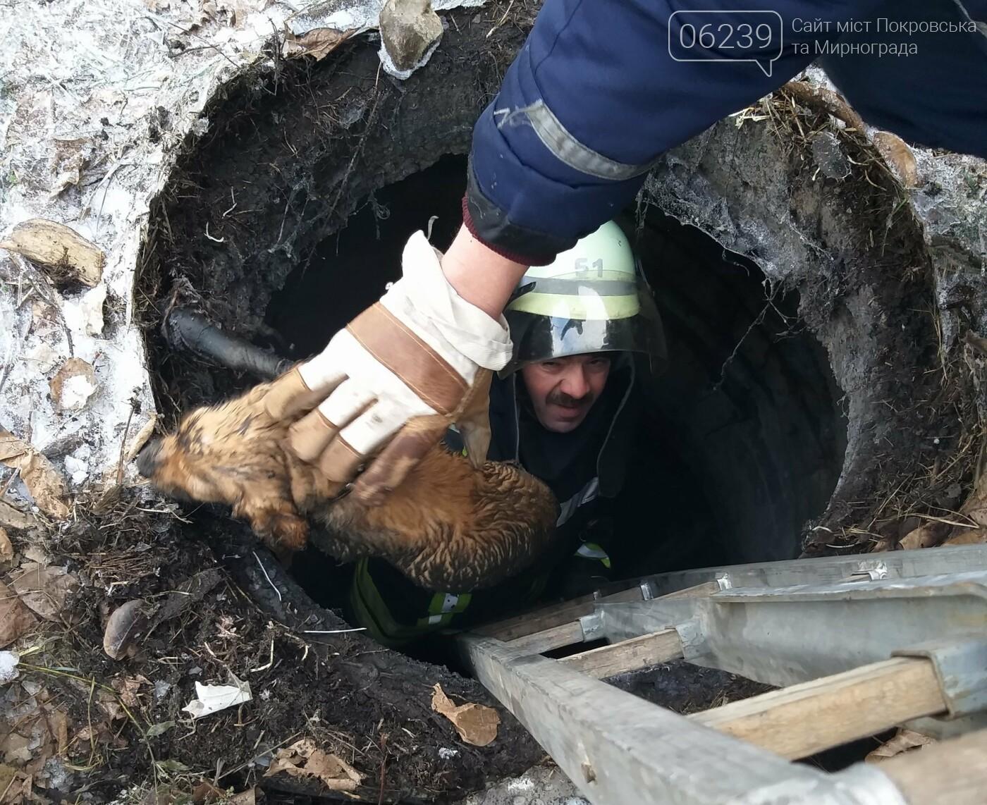 У Покровську бійці ДСНС врятували собаку, який впав у каналізаційний колодязь, фото-2