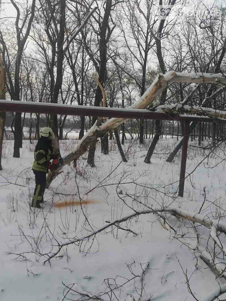 У Покровську старий клен впав на газопровід, фото-1