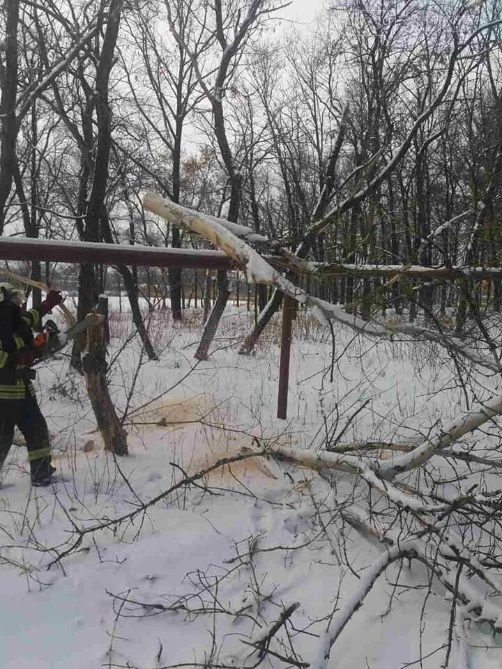 У Покровську старий клен впав на газопровід, фото-2