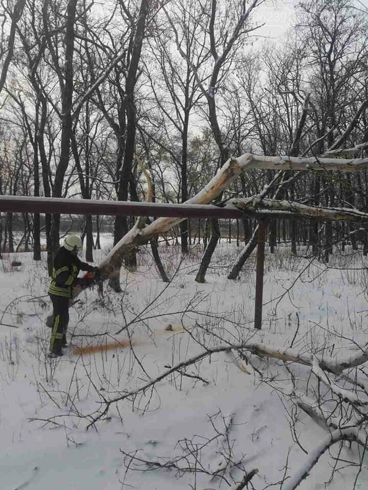 У Покровську старий клен впав на газопровід, фото-3