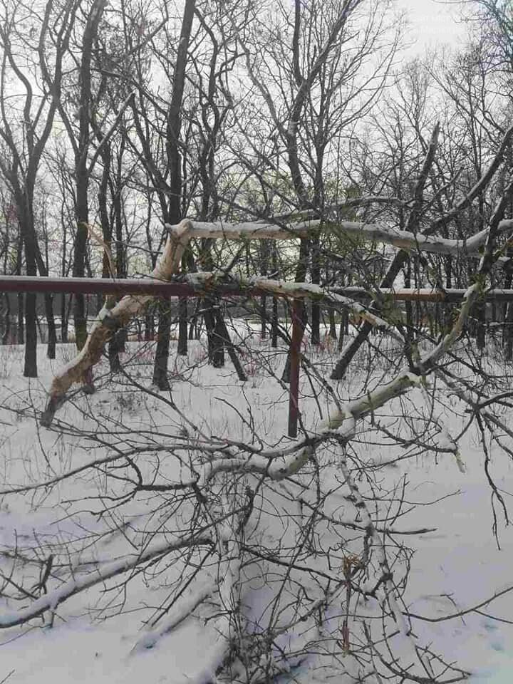 У Покровську старий клен впав на газопровід, фото-4
