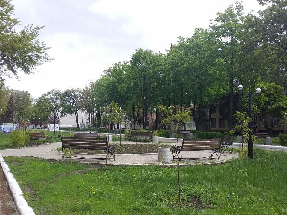 В Покровске началось цветение сакур, фото-5