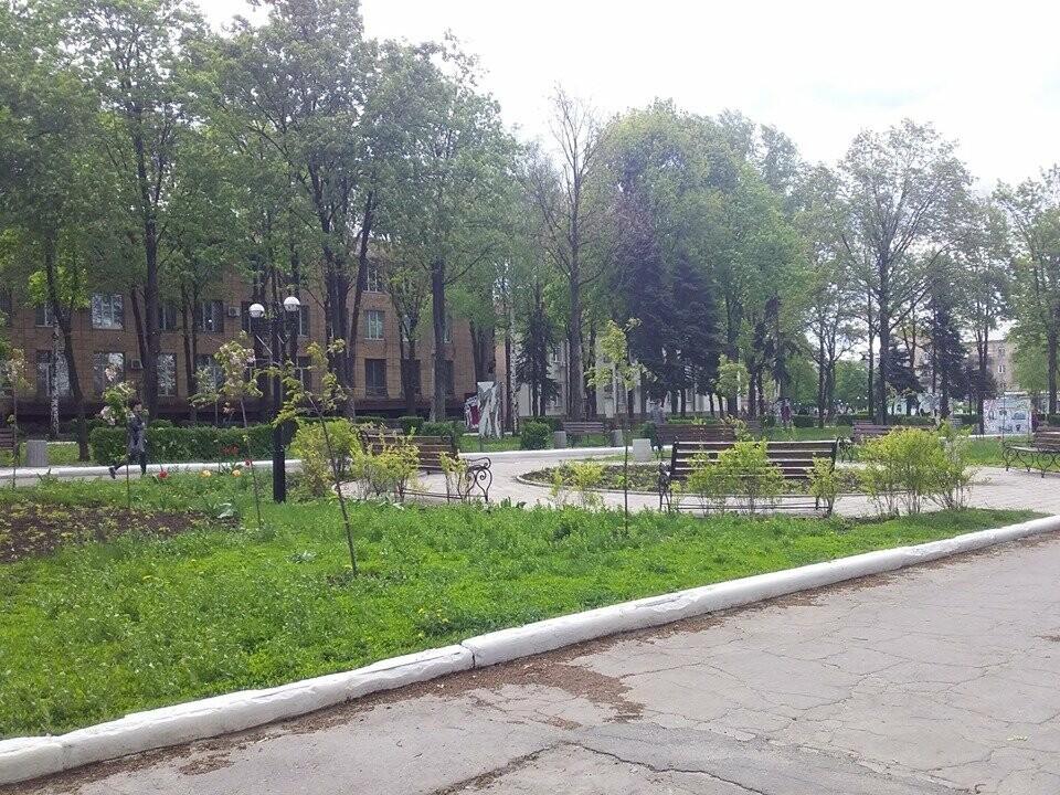 В Покровске началось цветение сакур, фото-6