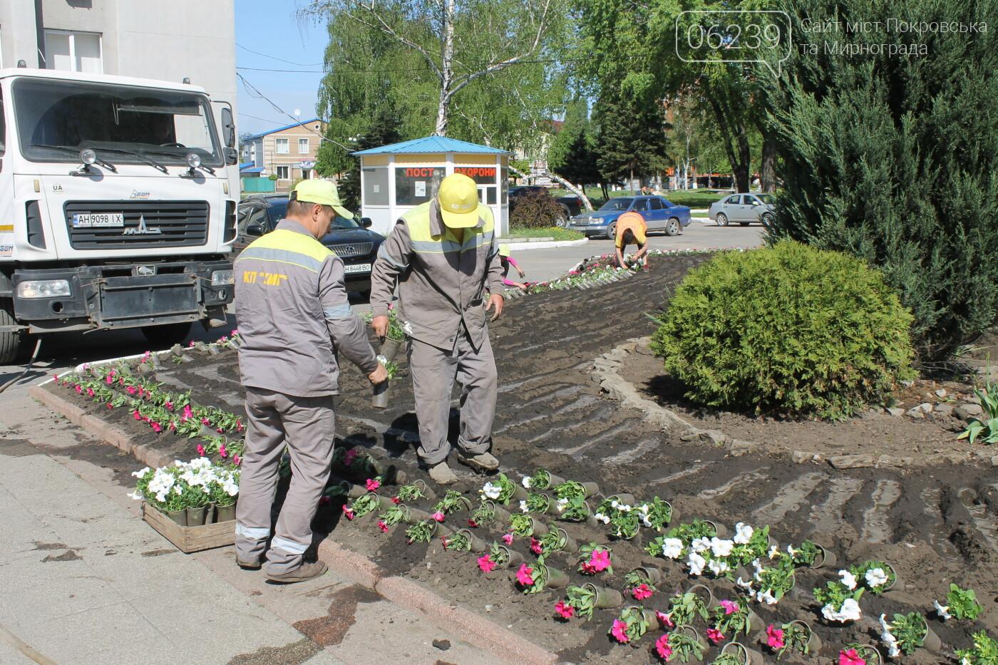 Пестрый Покровск: в городе начали высаживать петунии, фото-10