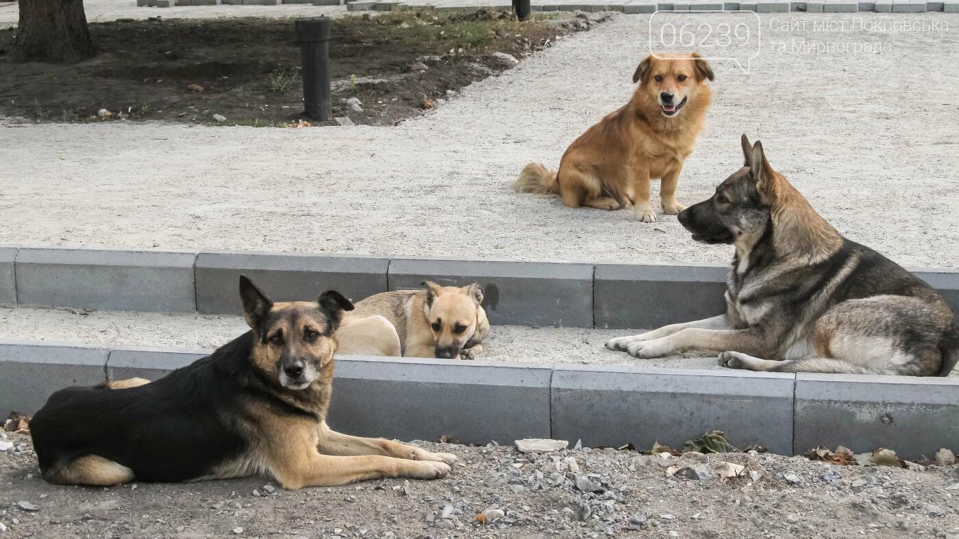 В Покровске отлов одной бродячей собаки обойдется бюджету в две тысячи гривен, фото-1