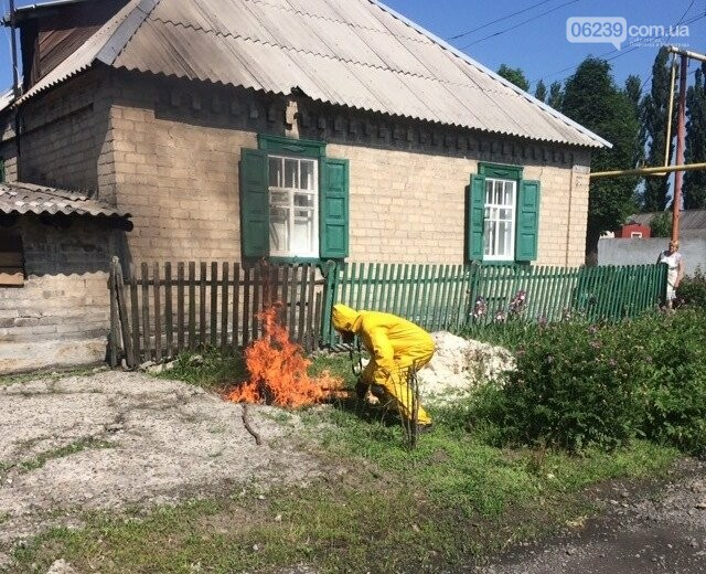 На подвір'ї покровчанки рятувальники знищили рій шершнів, фото-1