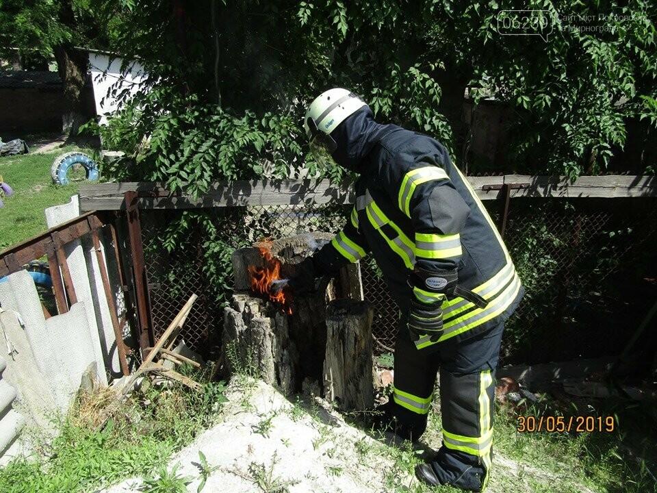 У Покровську рятувальники знищили рій шершнів на автобусній зупинці та на території дитячого садка, фото-1
