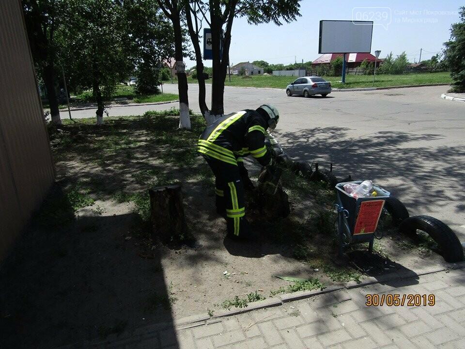 У Покровську рятувальники знищили рій шершнів на автобусній зупинці та на території дитячого садка, фото-2