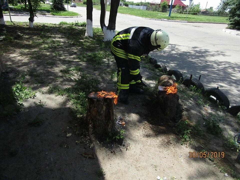 У Покровську рятувальники знищили рій шершнів на автобусній зупинці та на території дитячого садка, фото-4