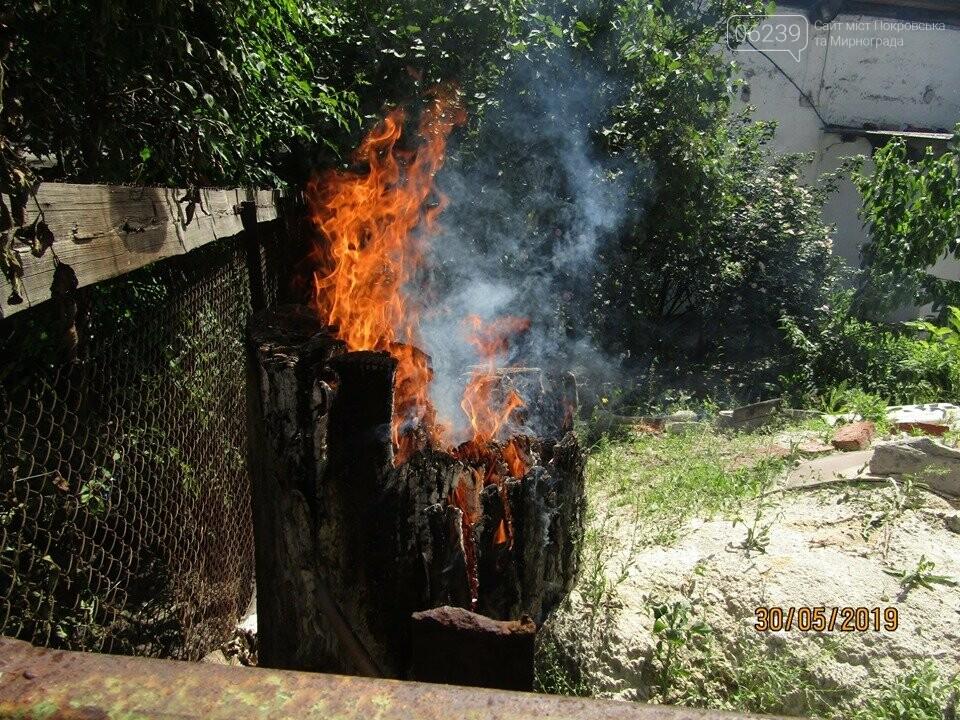 У Покровську рятувальники знищили рій шершнів на автобусній зупинці та на території дитячого садка, фото-5