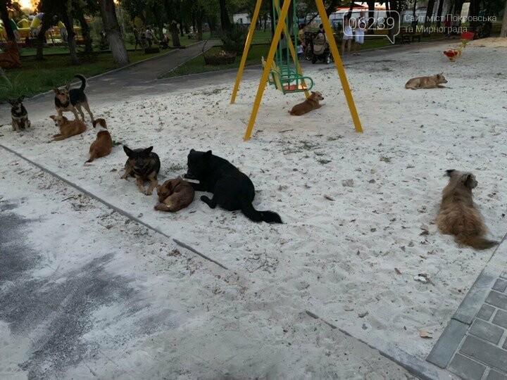 В Родинском бродячие собаки атакуют детские площадки, фото-1