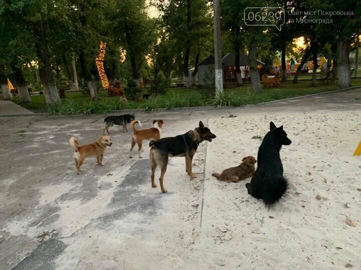 В Родинском бродячие собаки атакуют детские площадки, фото-2