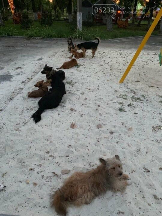 В Родинском бродячие собаки атакуют детские площадки, фото-3