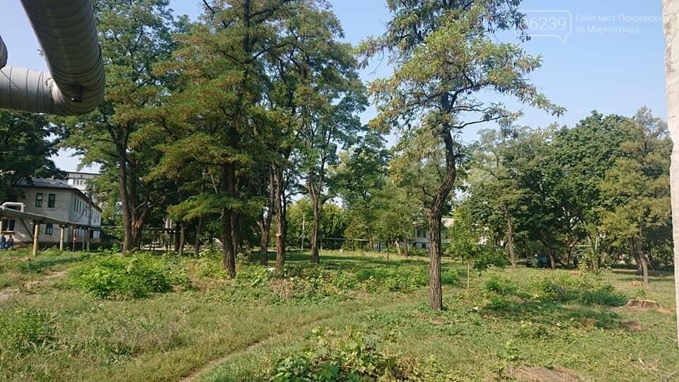 """Загадочная вырубка деревьев на """"5/6"""": в Мирнограде хотят обустроить новый сквер , фото-1"""