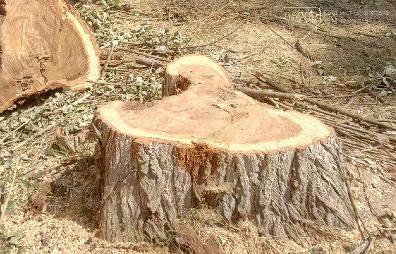 В Покровске продолжают срез/спил деревьев, под «нож» попало 81 дерево, фото-1