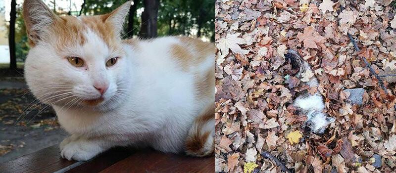В Мирнограде неизвестные убивают бездомных кошек, уже известно о 6 убитых животных , фото-3