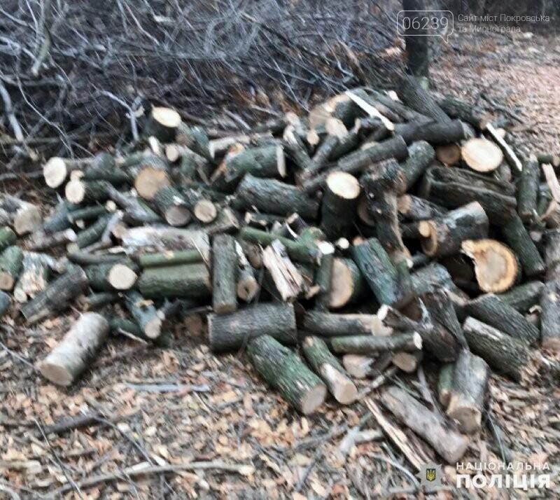 В Гришино задержаны шестеро «лесорубов», фото-1
