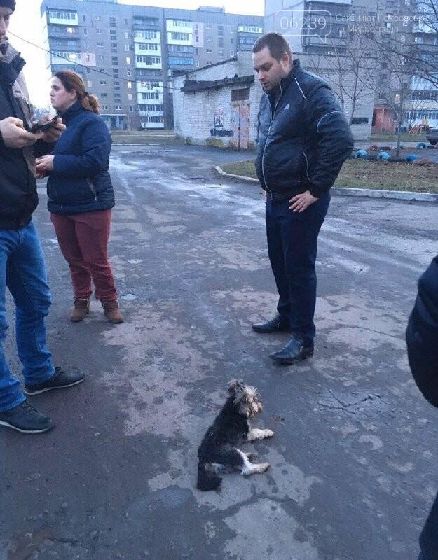 Соцсети всколыхнул поступок таксиста в Покровске: сбил собаку и скрылся с места происшествия, фото-2