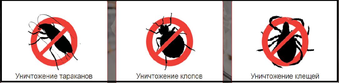 В Покровске начала работать компания по дезинсекции «Дезконтроль» , фото-1