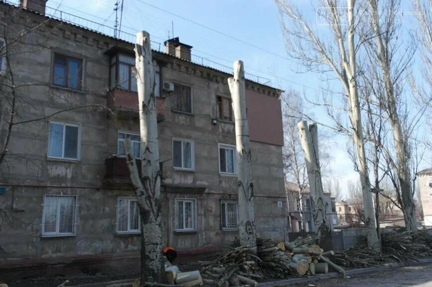 «Не омоложали, а уничтожали»: в Покровске больше не будут бездумно обрезать деревья, фото-1