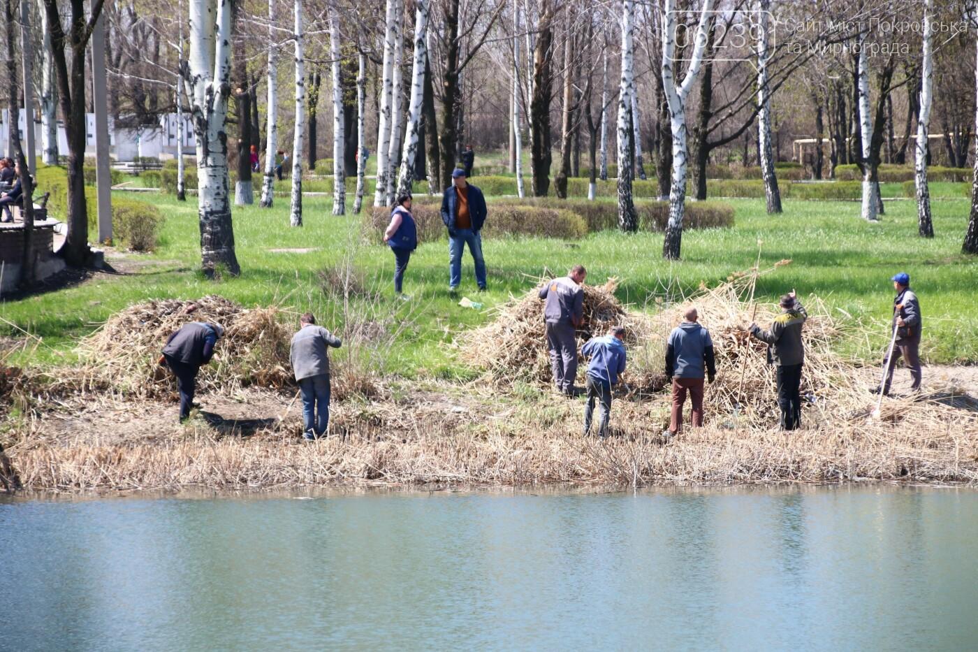 В Мирнограде состоялся общегородской субботник , фото-3